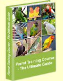 About Budgie: Training, Temperament & Characteristics