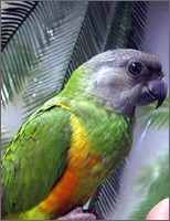 how to train a senegal parrot not to bite
